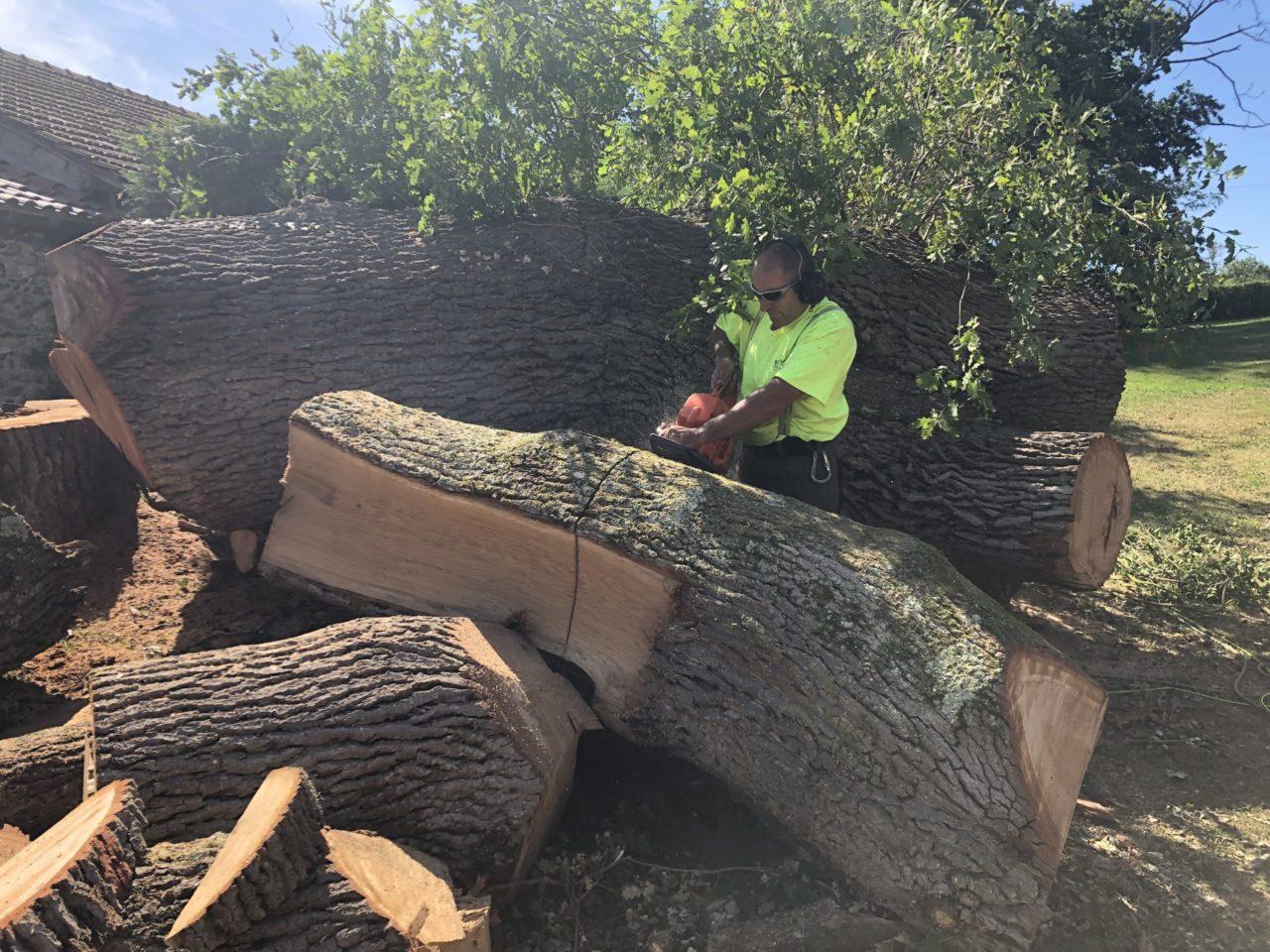 Élagage & abattage d'arbres